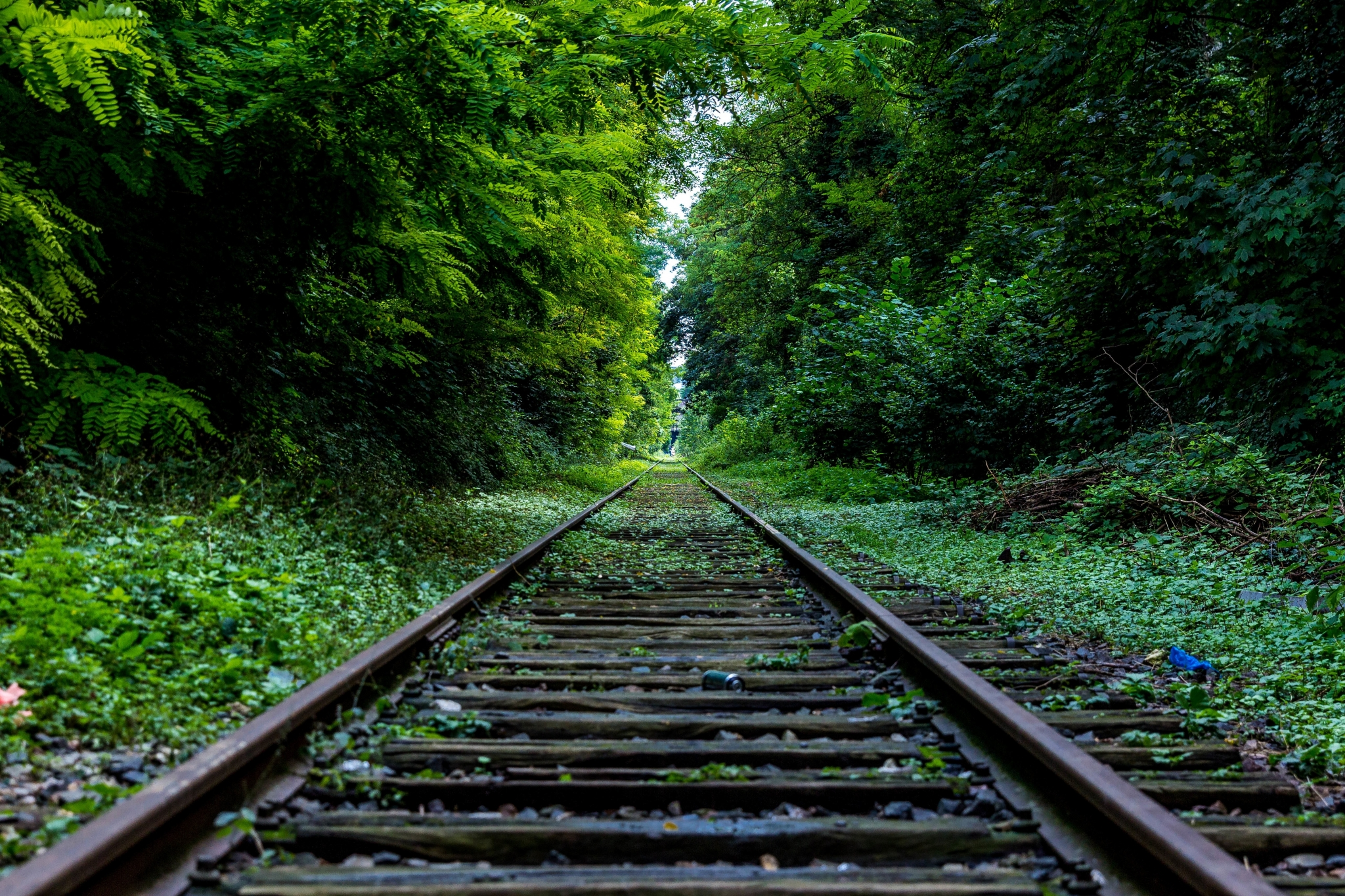 forest and train rail